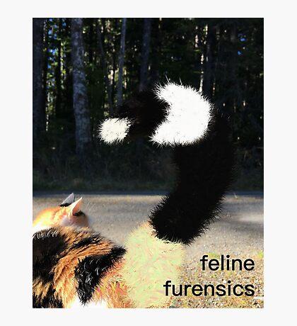 Calico Furensics Photographic Print