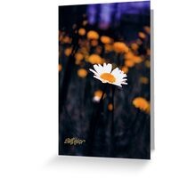 A Daisy Alone Greeting Card