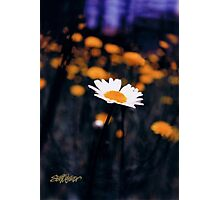 A Daisy Alone Photographic Print