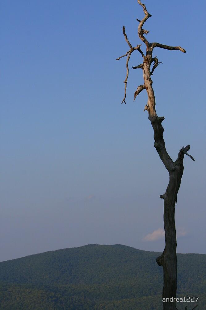 Bare Tree by andrea1227