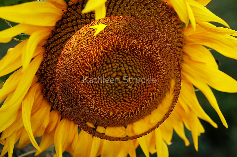 Sunflower Spin by Kathleen Struckle