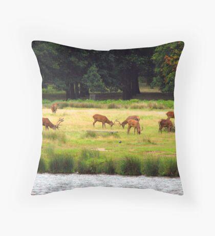 Deer in Richmond Park Throw Pillow