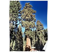 Sequoia National Park Majesty Poster