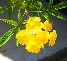 Yellow Flower with Leaves by Billie Ingram