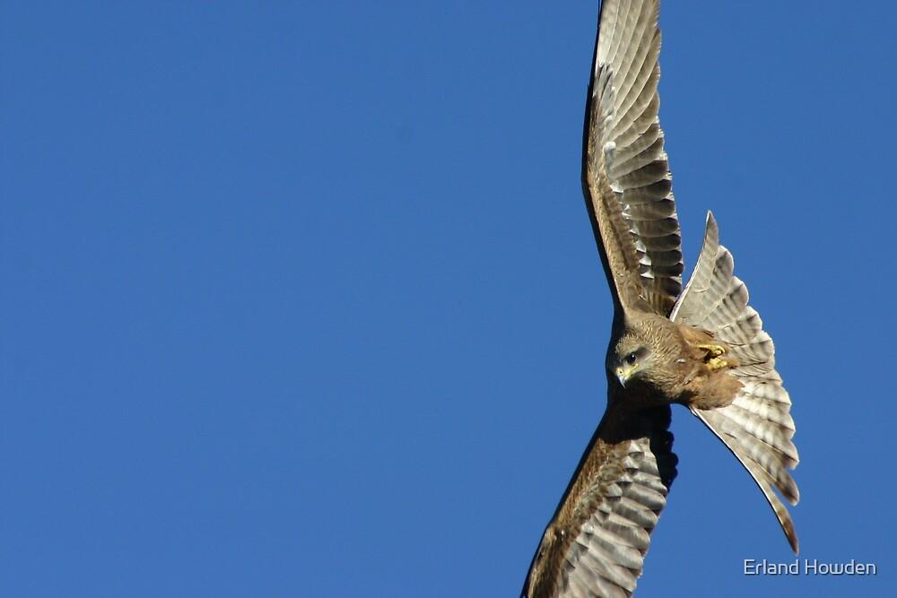Vertical Flight by Erland Howden