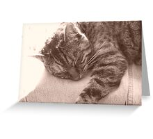 Purr-fect Peace Greeting Card