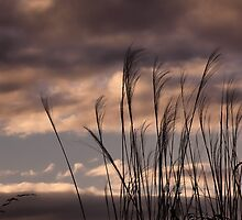 Tall Grasses at sunset by vigor