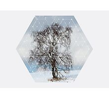 Nature and Geometry - The Sad Tree Photographic Print