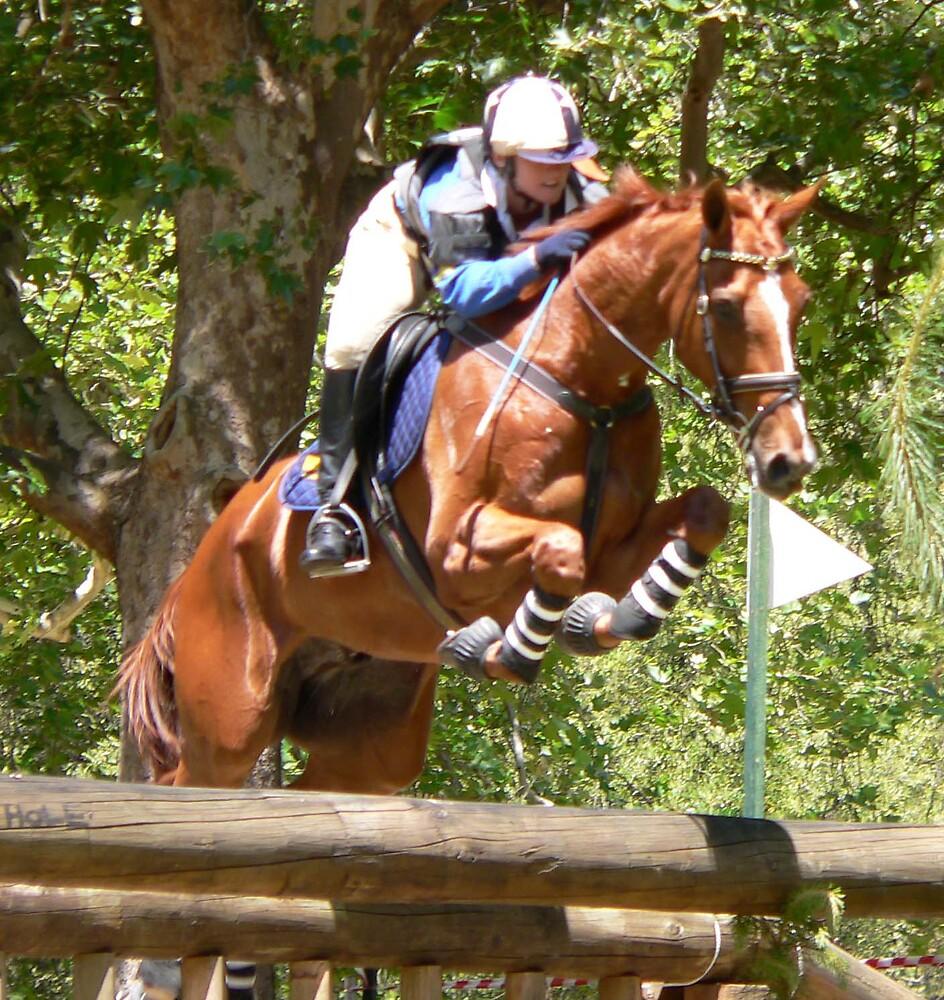 Horse Jump by Jacko