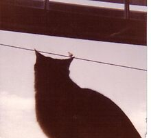 Bird on an a cats ear by windrider
