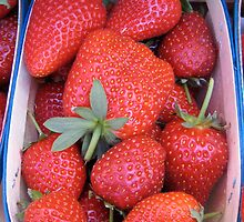 fraises by ceciliam