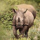 Young Rhino by Brooke Reynolds