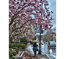First Spring Rain Photographic Print