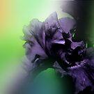 Veiled Iris by kalliope94041