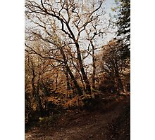 Autumn walks. Photographic Print