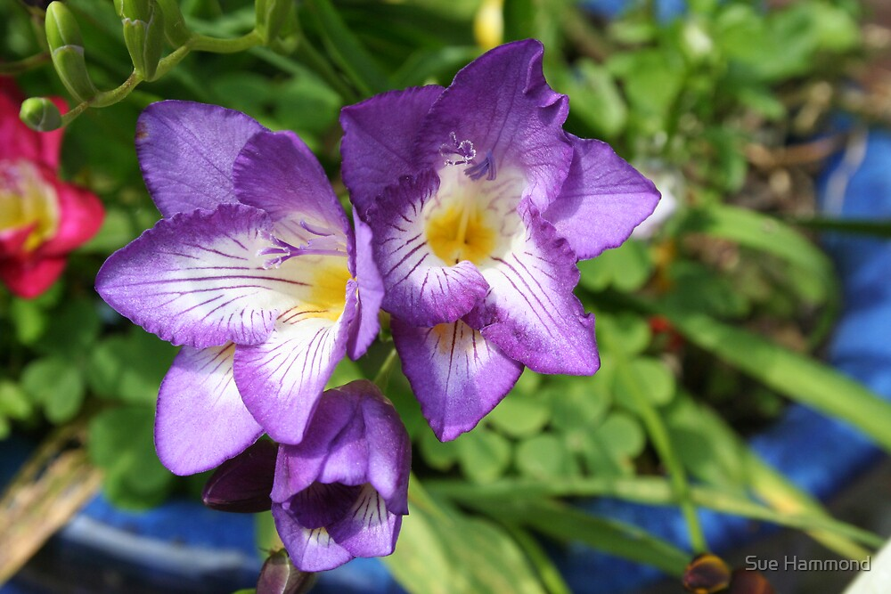 Summer flower by Sue Hammond