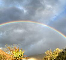 Rainbow by Deon de Waal