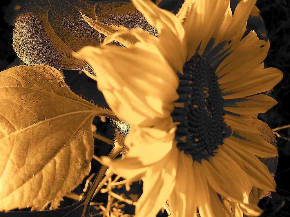 Sunny Flower by Gene Cyr