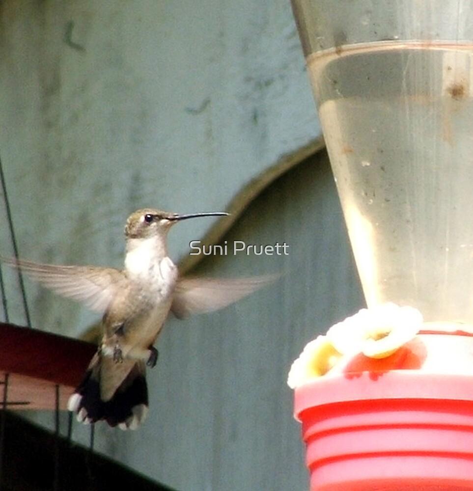 Female Hummingbird by Suni Pruett