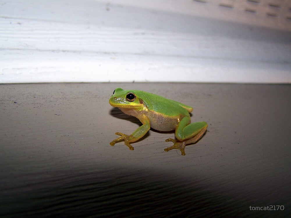 lil froggy by tomcat2170