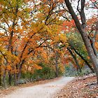 Autumn Colors of Lost Maples State Park by RobGreebonPhoto