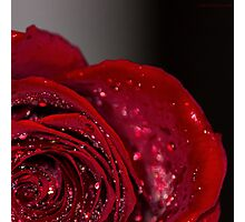 Red Rose macro 2 Photographic Print