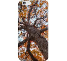 Red Maple Tree in November - Lost Maples State Park iPhone Case/Skin