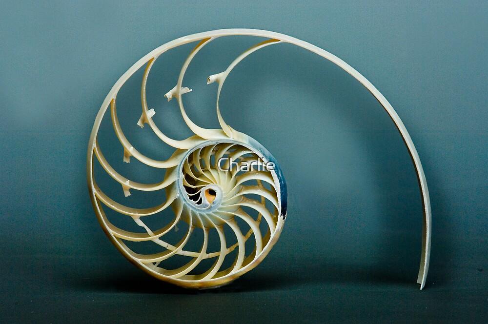Amazing Nautilus by Charlie