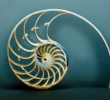 Amazing Nautilus by Charlie