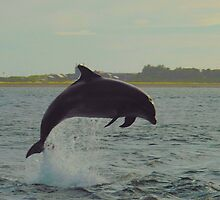 Dolphin from shore by Steve