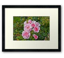 Beautiful flowers Framed Print