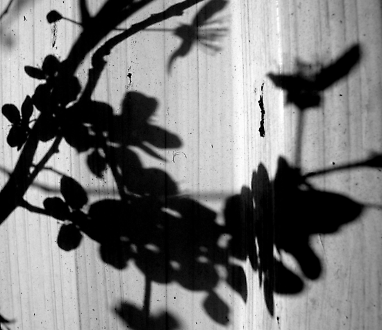 Shadows on the Shed by Kitsmumma