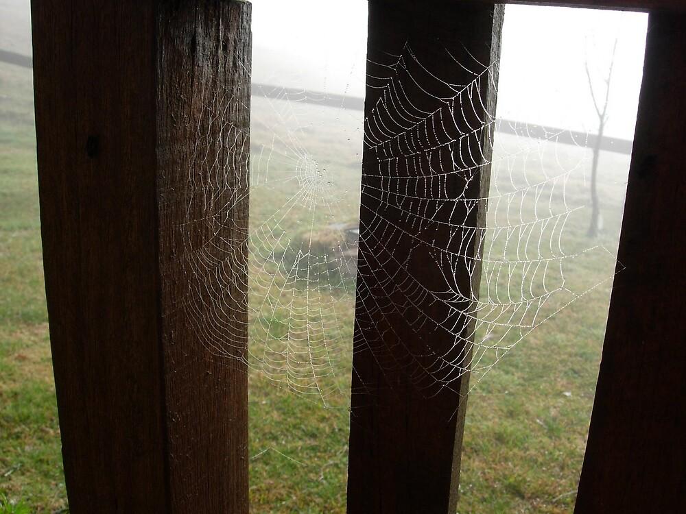 Web by drarnott