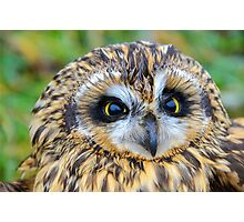 short-eared owl Photographic Print
