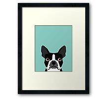 Logan - Boston Terrier pet design with bold and modern colors for pet lovers Framed Print