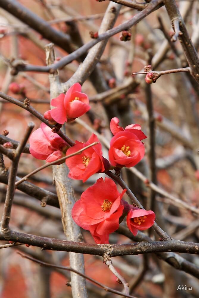 Bloom by Akira