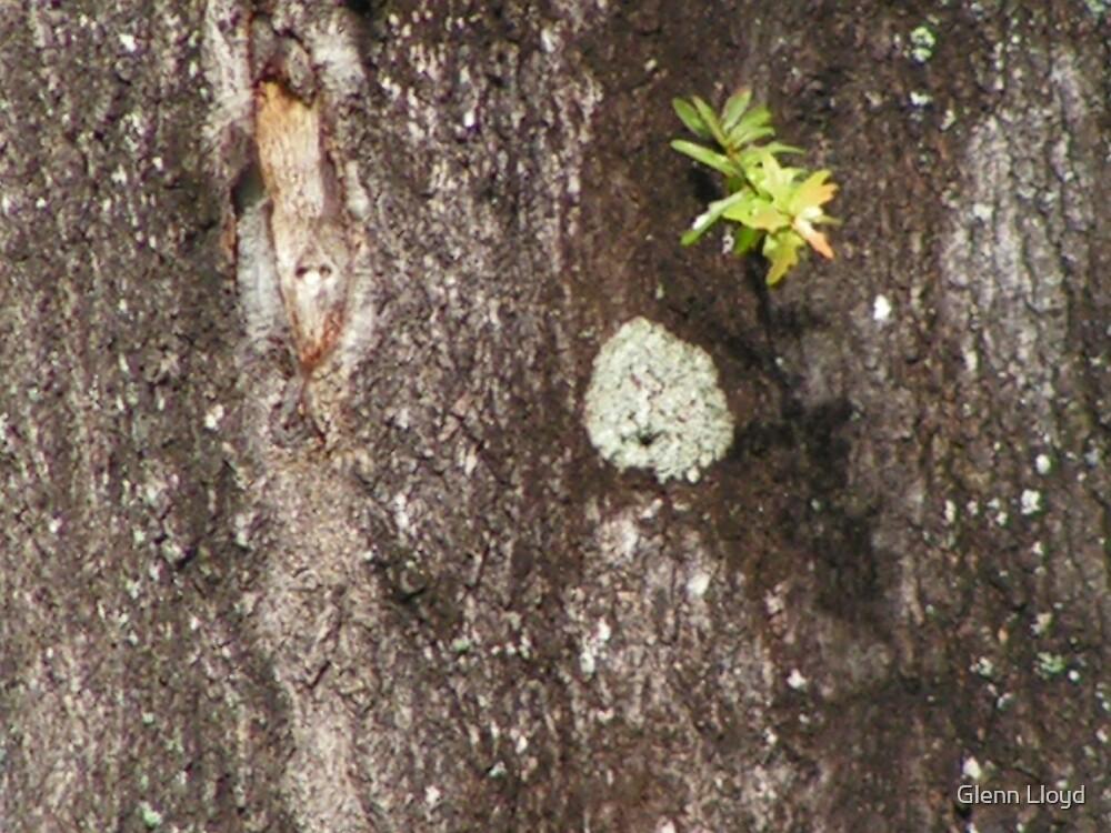Fungi by Glenn Lloyd