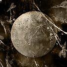 Moon Web by Matt West