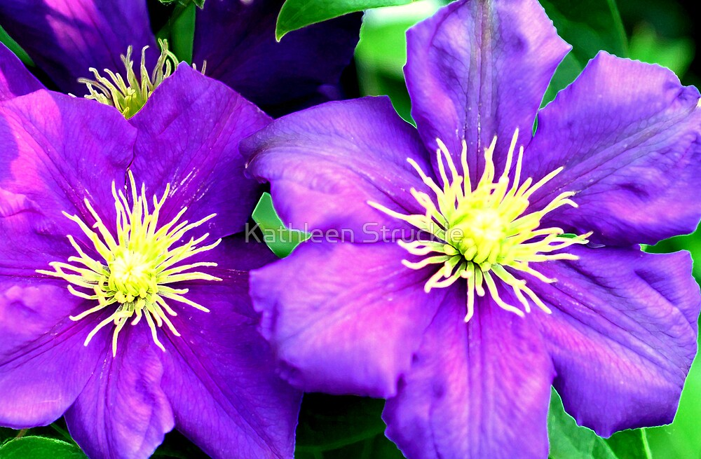 Purple Twins by Kathleen Struckle