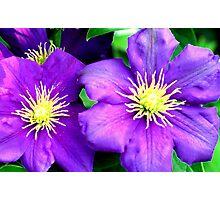 Purple Twins Photographic Print