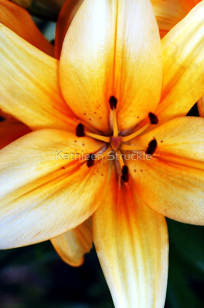 Day Lilly by Kathleen Struckle