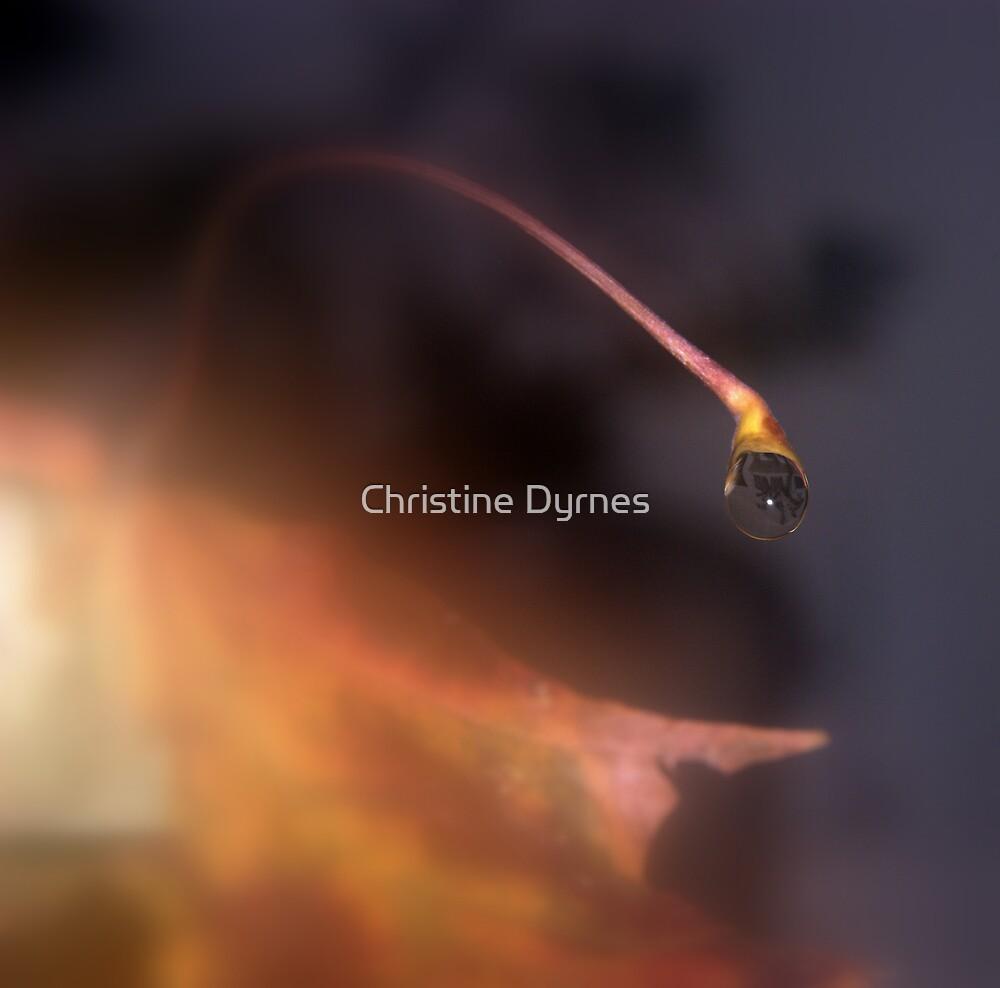 autumn drop2 by Christine Dyrnes