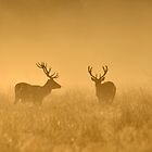 Two Stags by Kasia Nowak