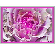 Pretty Pink Soft and Wet Photographic Print