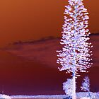 Tall Tree... by Renae