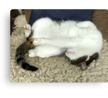 Taking a nap Canvas Print