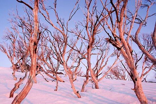 Pink Snow Gums by John Barratt