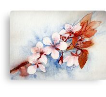 Prunus Blossom Canvas Print