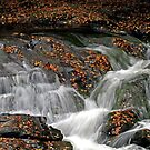 ~Let the River Flow~ by Terri~Lynn Bealle