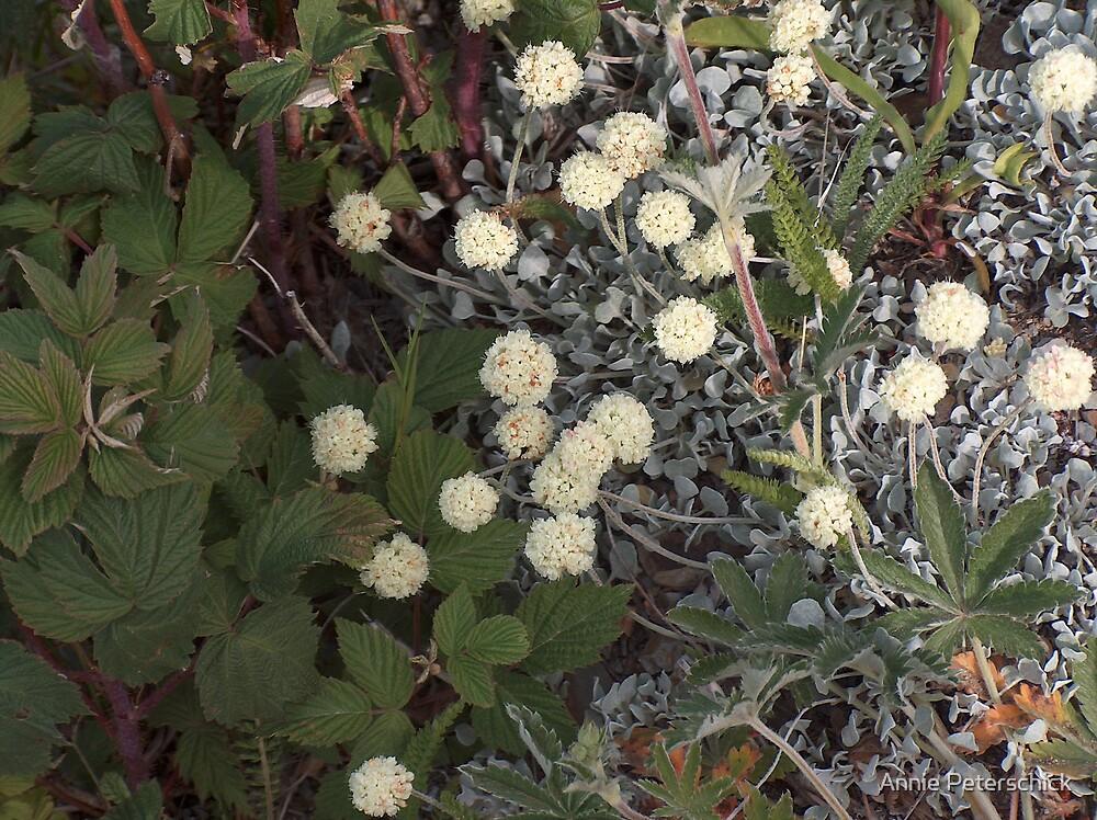 White flower 3 by Annie Peterschick